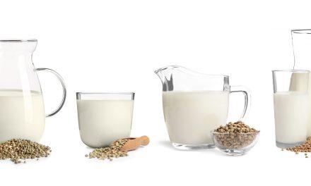 Tout sur les laits végétaux tout crus : sains et délicieux !