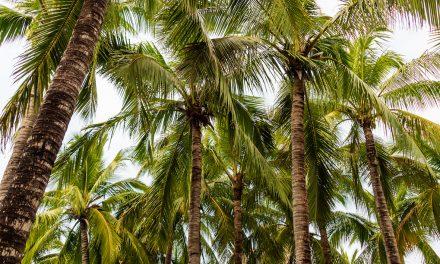 La noix de coco: pourquoi elle est exceptionnelle