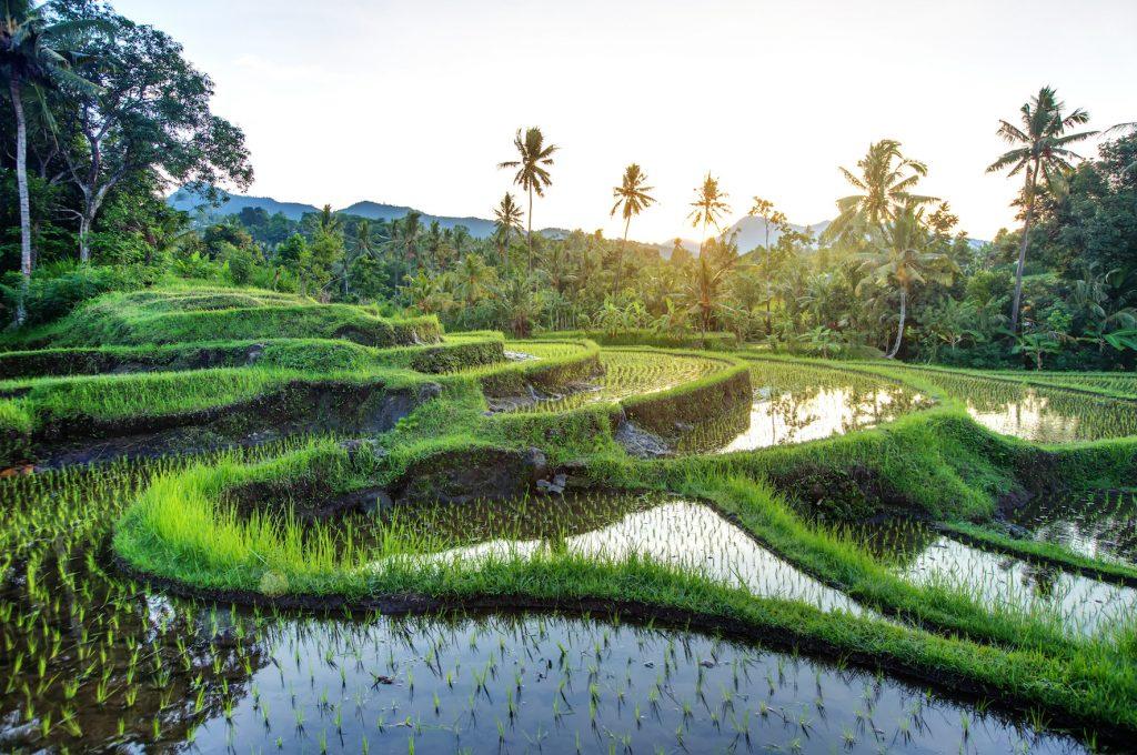 Rizières-Indonésie-Bali-gado-gado